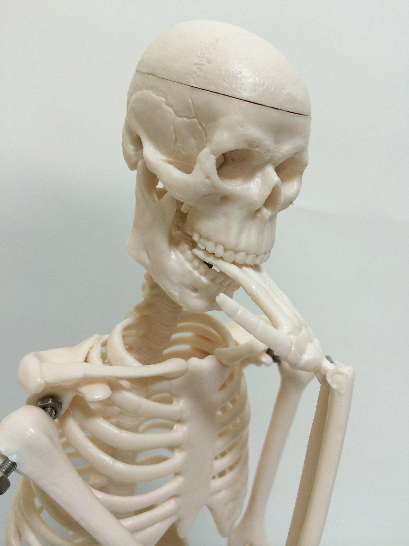 Human body skeleton model 45cm HUMAN SKULL systemic skeleton (finished product) upright stand specification skeletal preparations mannequin