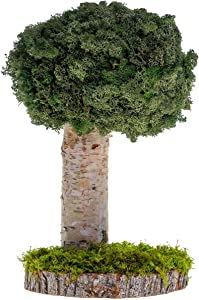 Real Plants Without Watering, Preserved Moss Art Design & Decor - Indoor Home & Office Natural Green Plants Arrangement