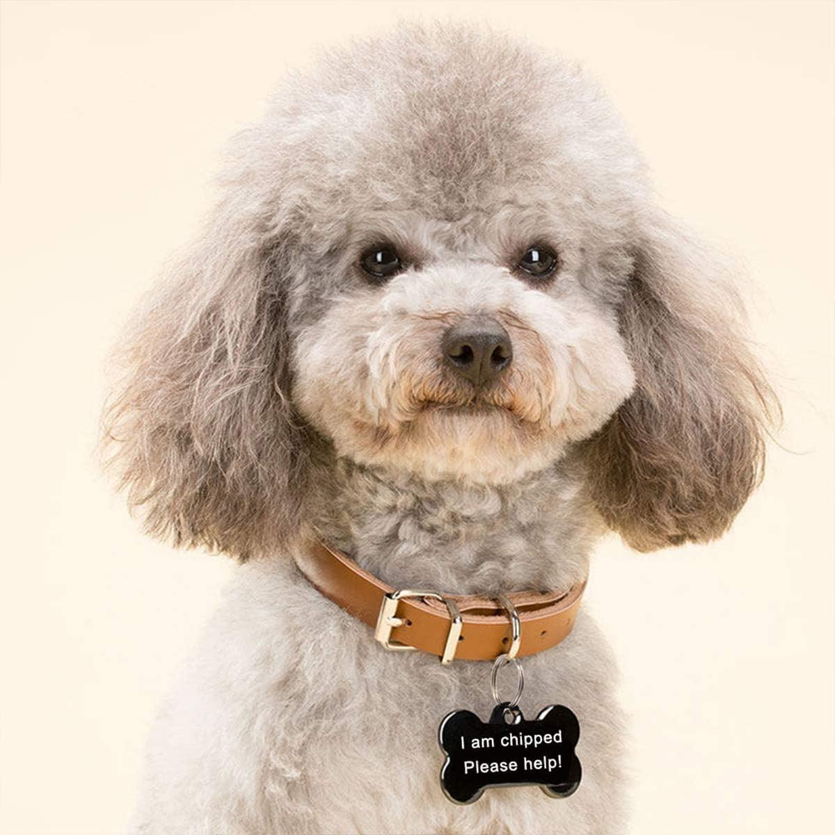 Blau Cerolopy Personalisiert Haustier ID Tag Hund Tag mit Gravur Service Hundemarke Anhaenger aus Edelstahl 25 mm x 38 mm