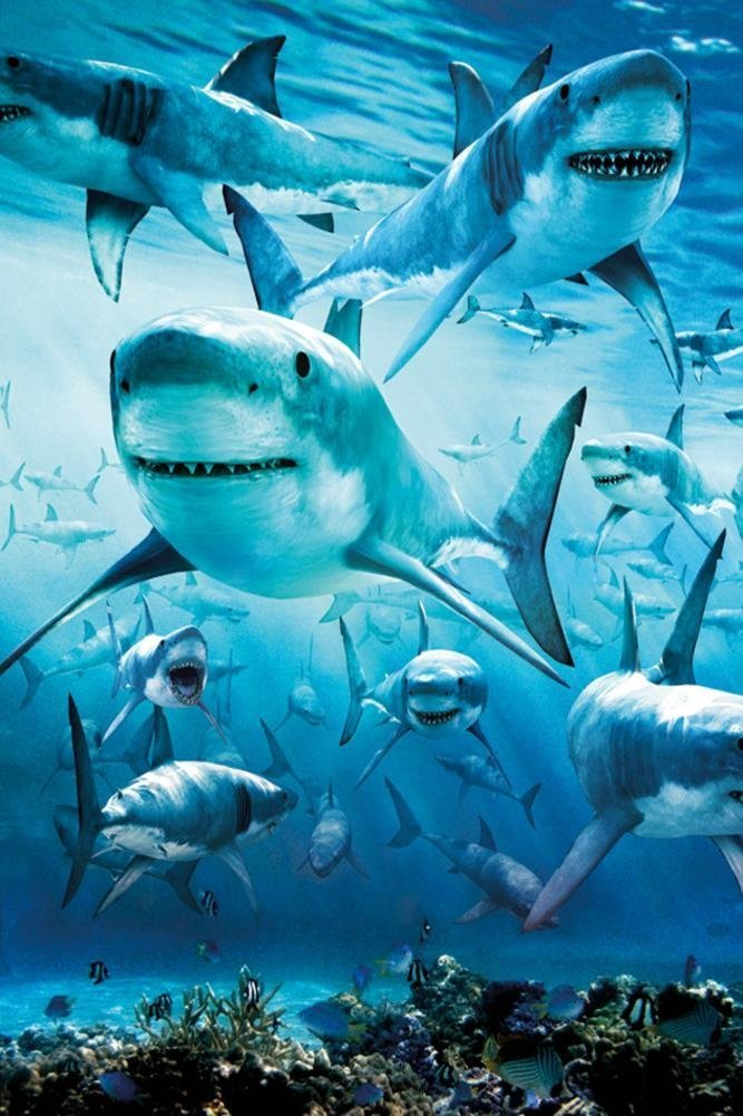 HommomH 12 x 27 Bath Towel Washcloths Multi-purpose Microfiber Shark Infested HommomHDirect