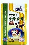 ヒカリ (Hikari) ひかりウーパールーパー 30g