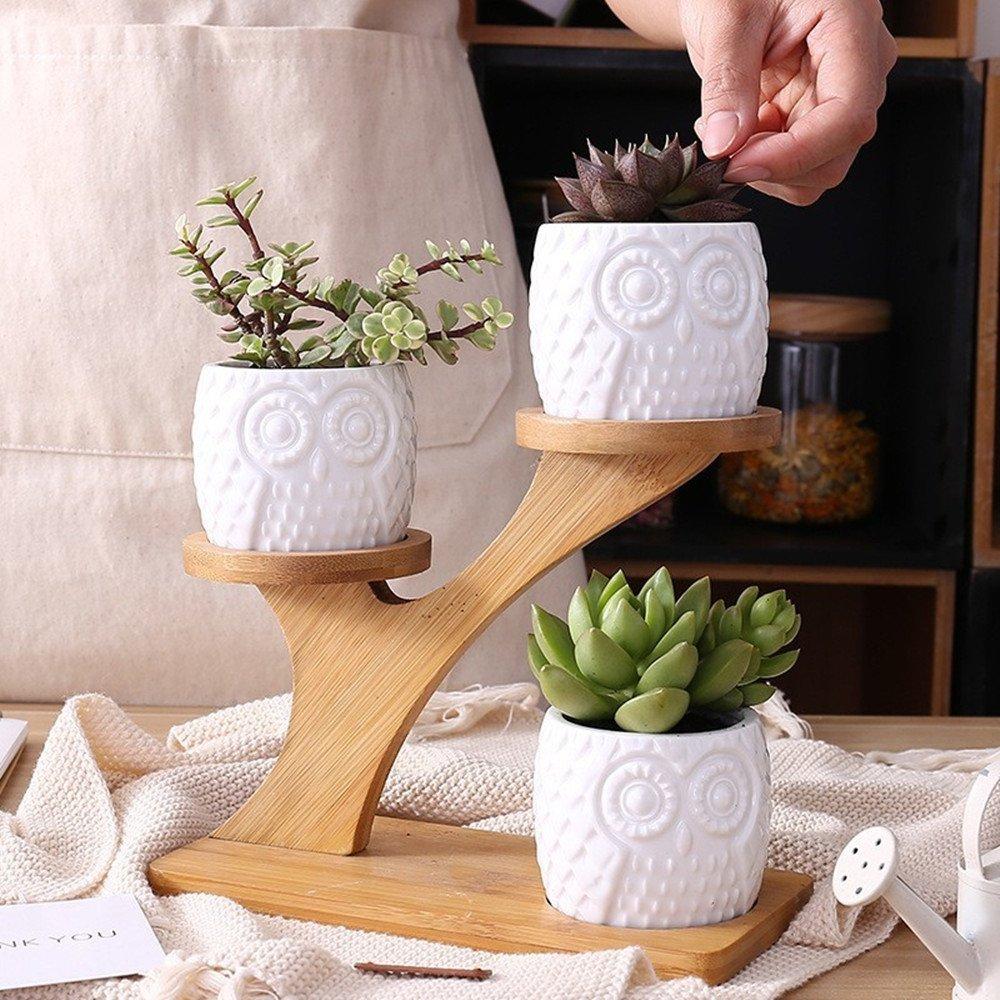 y bandeja de bamb/ú planta en macetas Clubes profundos 1 juego b/úho de cer/ámica maceta de cer/ámica forma redonda Grow 1 paquete de 3 macetas de cactus