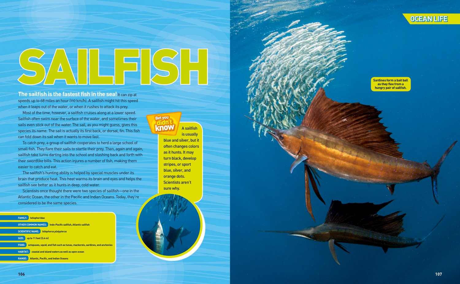 Ultimate Oceanpedia: The Most Complete Ocean Reference Ever (National Geographic Kids) by National Geographic Society (Image #4)