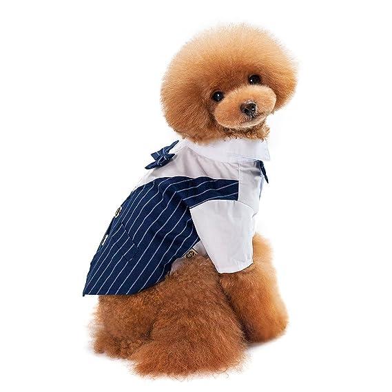 Amazon.com: Leshuo - Disfraz de prince para perro, para boda ...