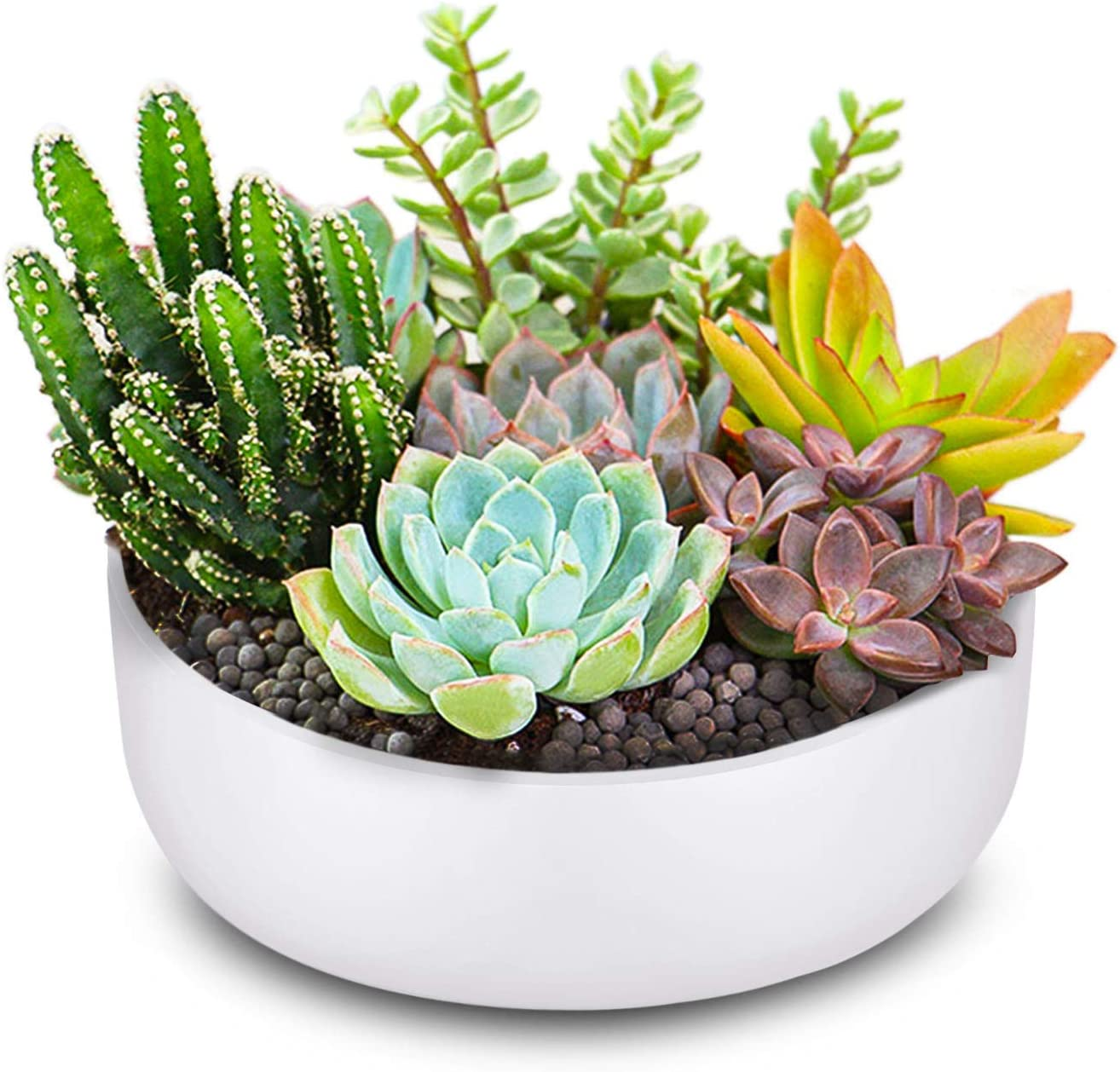 Flexzion 6 Inch Round Ceramic Succulent Planter Pot - Cactus Herb Flower Container Window Box Holder for Tabletop Desktop Indoor Outdoor Home Office Garden (White)