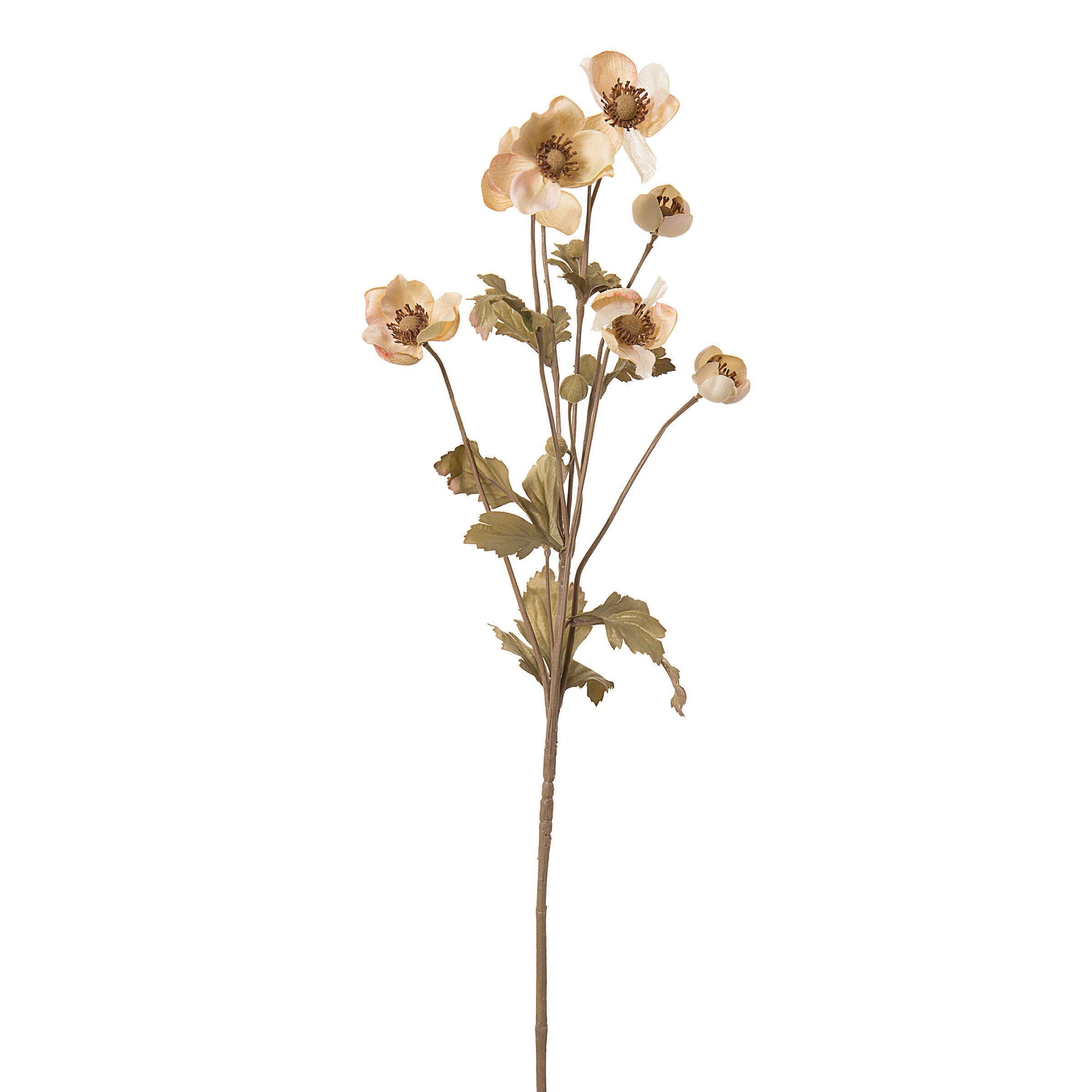 Darice Kbi-11733-1 Everyday Long Stem Dry Anemone, 27'', Cream