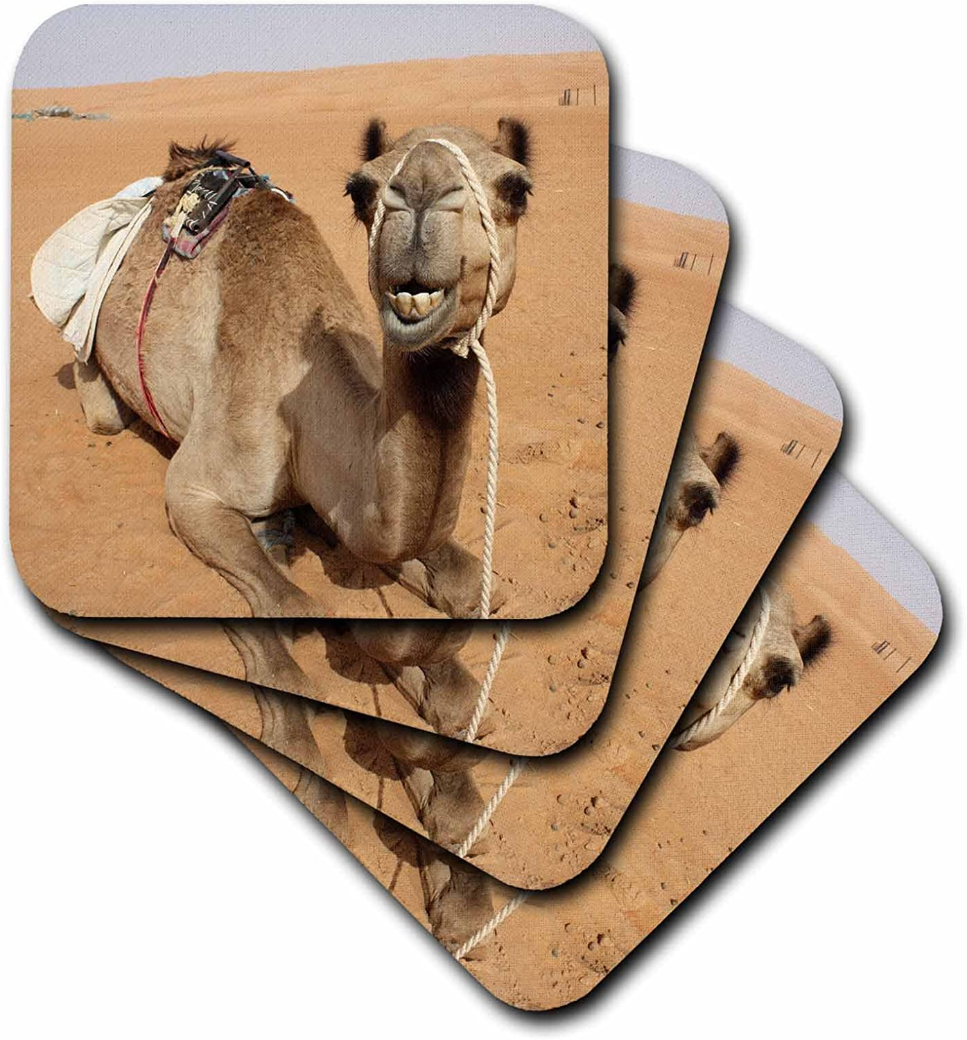 3dRose CST_164767_2 Smiling Camel Resting at Bedouin Camp in Oman Photo by Rhonda Albom Soft Coasters, (Set of 8)