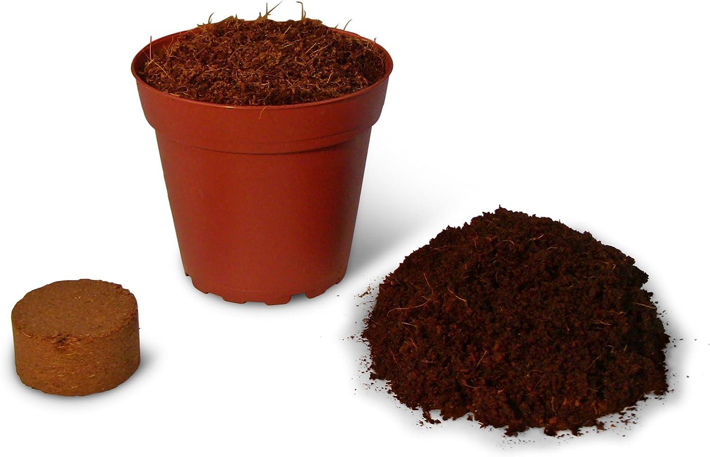 Fiber Tierra (12 tazas) orgánico Potting Soil + hydrating Bag=Sano semillas de plantas. Para Plantar Plantas de depósito de interior, PARTIDA, hierbas, flores, Wheatgrass, microgreens | easy-to-store.: Amazon.es: Jardín