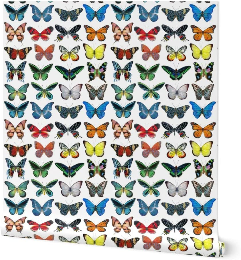 Removable Water-Activated Wallpaper Butterfly Collection Bug Insect Wings