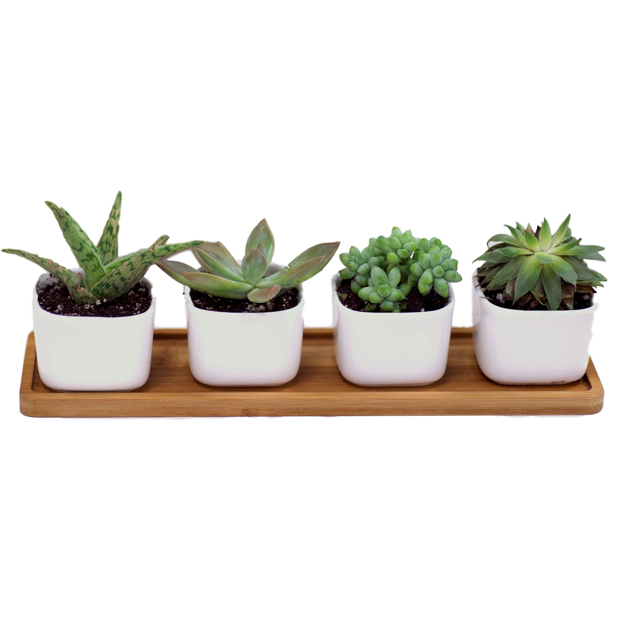 Mini Succulent Pots for Windowsill Or Bookshelf – 4-Piece White Ceramic Plant Pots – Wooden Tray Included – Minimalist Elegant Design – Bottom Holes for Draining – Ideal for Small Flowers, Cactus by Mini Gardener