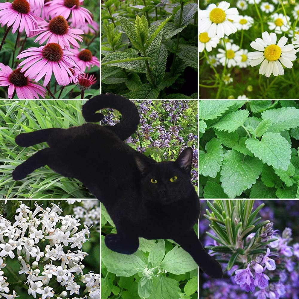Amazon Com 9 Lives Cat Plant Seed Collection 9 Variety Seed