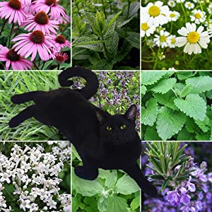 9 Lives Cat Plant Seed Collection - 9 Variety Seed Pack of Plants for Cats - Cat Grass, Catmint, Catnip, Echinacea, German Chamomile, Lemon Balm, Rosemary, Spearmint, Valerian - FROZEN SEED CAPSULES