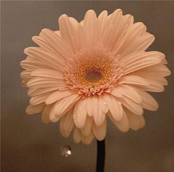 Amazon   花は咲く   花は咲くプ...