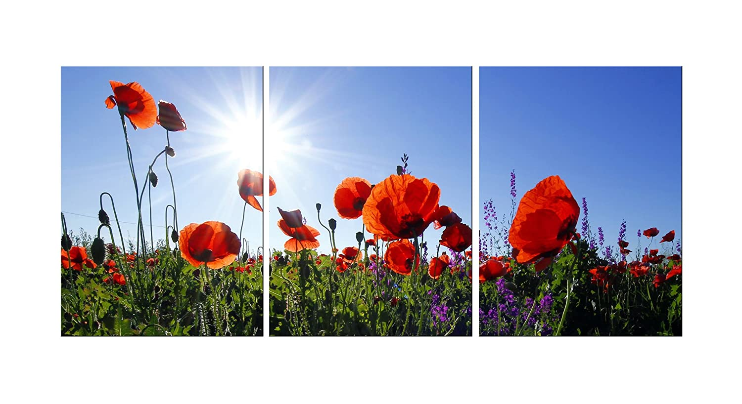 Amazon Kitchen Canvas Wall Art Red Poppies Flowers With Sun