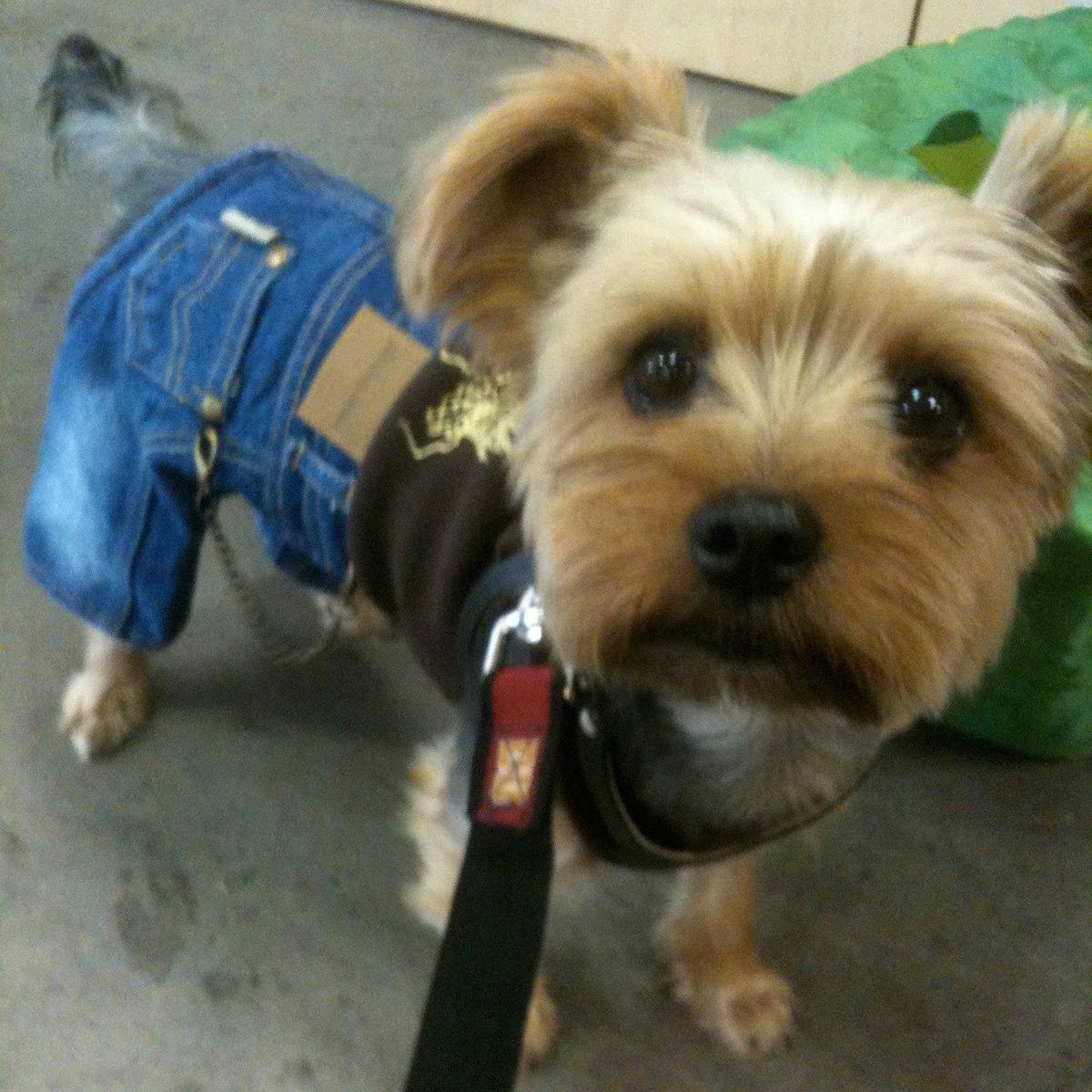 Monkey Daze Designer Dog Apparel - Roly Dragon Denim Jumper - Color: Brown & Denim, Size: M