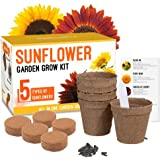 Sunflower Grow Kit - Grow 5 Different Sunflowers - A Complete Beginner Gardeners Gift Growing Set to Start Your Own Indoor Fl