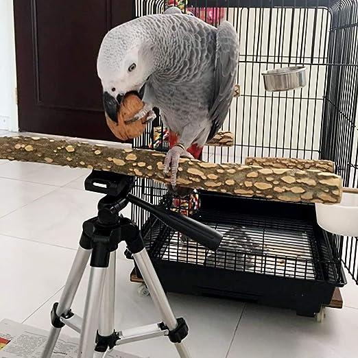 Amazon.com: TOYPOPOR - Perchas de viaje para pájaros de ...