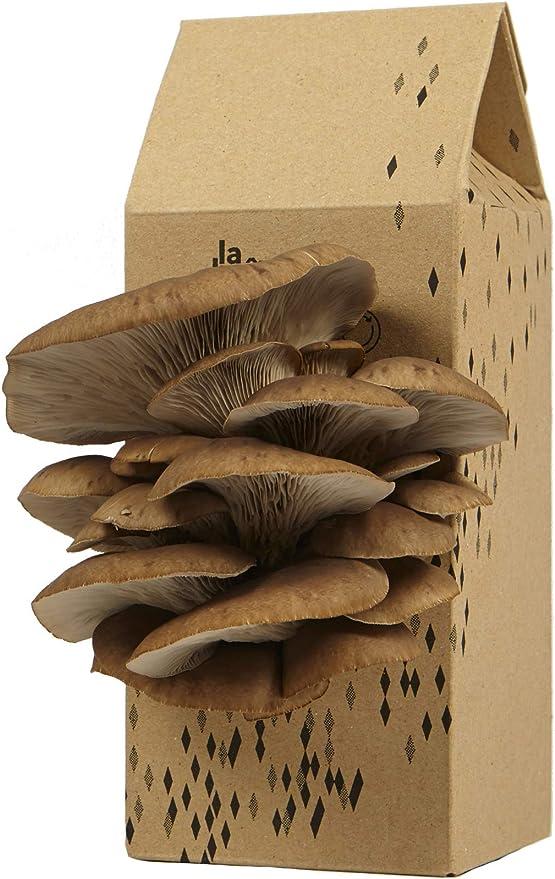 Upcycle | Cultivo de hongos | Kit de setas de ostras grises ...