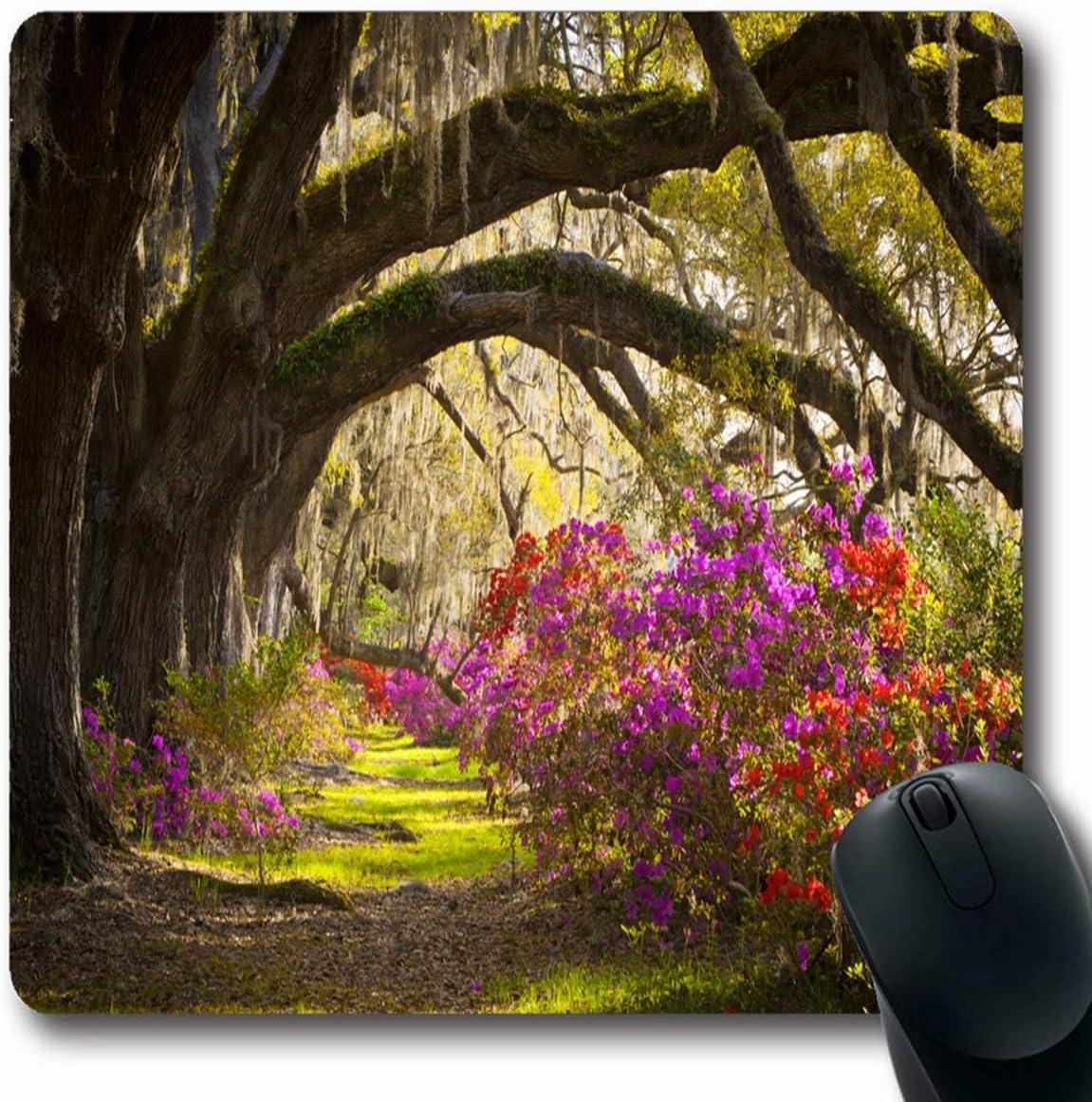 Luancrop Alfombrillas Sunrise Charleston SC Plantación Live Oak ...