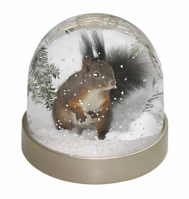 Amazonde Wald SchneeEichhrnchen Schneekugel Globus Wasserball