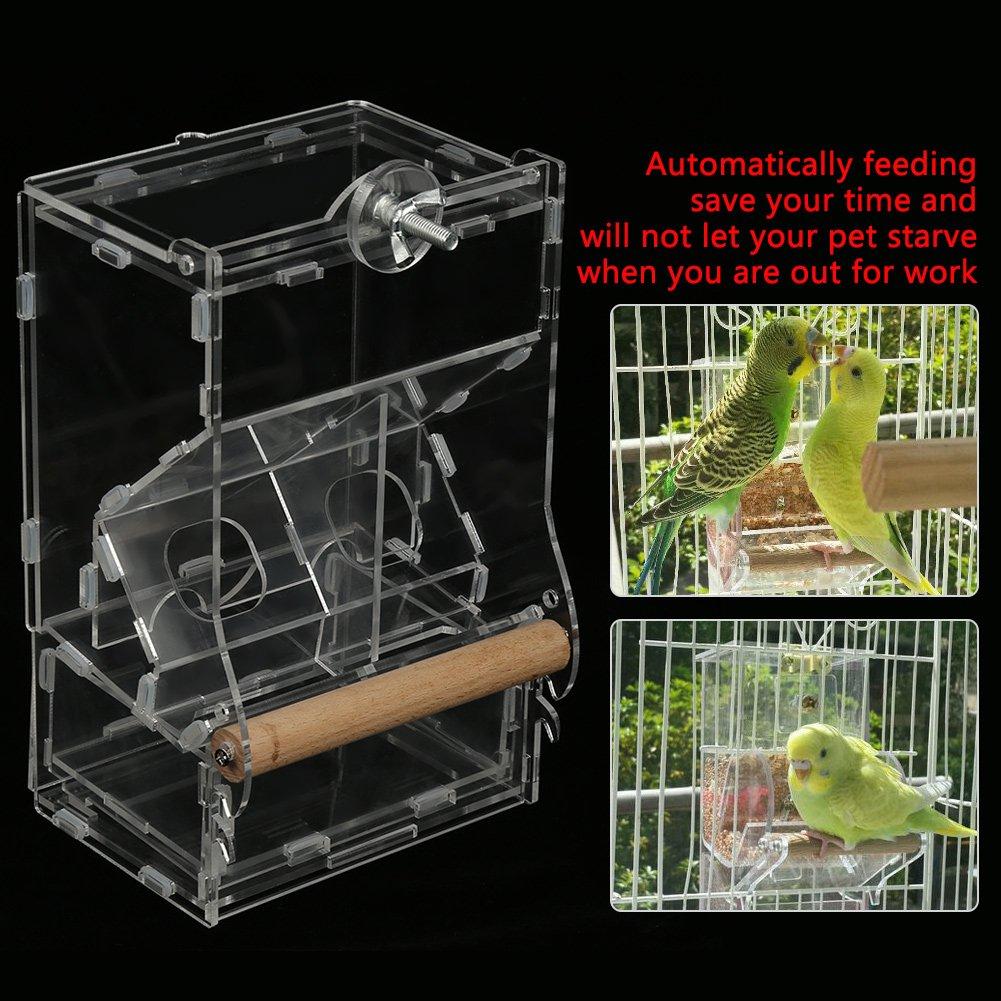 Comedero para Pájaros Dispensador Acrílico Automático para ...