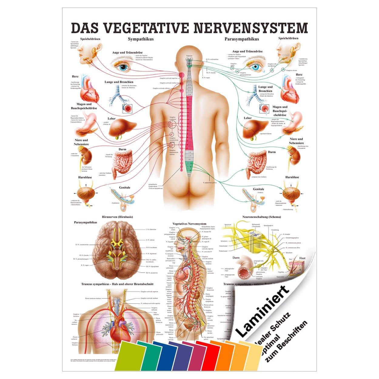 Ziemlich Menschliche Anatomie Karte Zeitgenössisch - Menschliche ...
