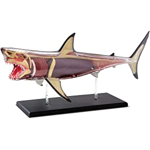 Discovery Mindblown 4D Great White Shark Anatomy Kit, Interactive Marine Biology Model, Learn Science, Fun and Educational STEM Toy for Kids Ages 6 and Up