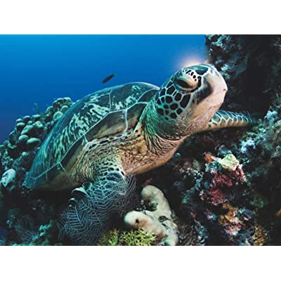 New York Puzzle Company - National Geographic Green Sea Turtle - 500 Piece Jigsaw Puzzle: Toys & Games