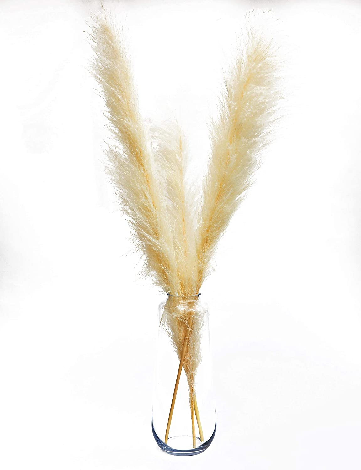 3 Stems Fluffy White Dried Pampas Grass, Boho Wedding Decor Home Decor Large Flower Decor for Tall Floor Vase - 4 Foot Tall Dried Flowers