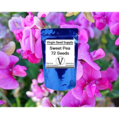Virgin Seed Supply Sweet Pea 72 Count Flower Seed Pack Organic Non-GMO Heirloom Variety : Garden & Outdoor