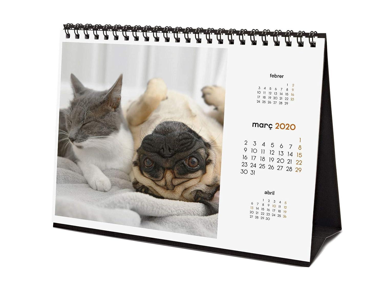 Finocam 2020 Calendario da tavolo con immagini Cani e Gatti catalani