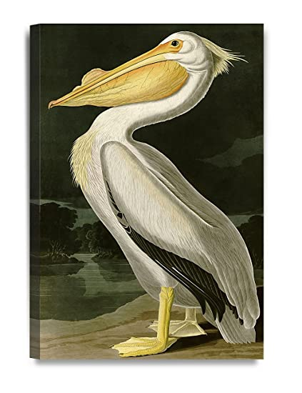 Amazon.com: DECORARTS American White Pelican by John James Audubon ...