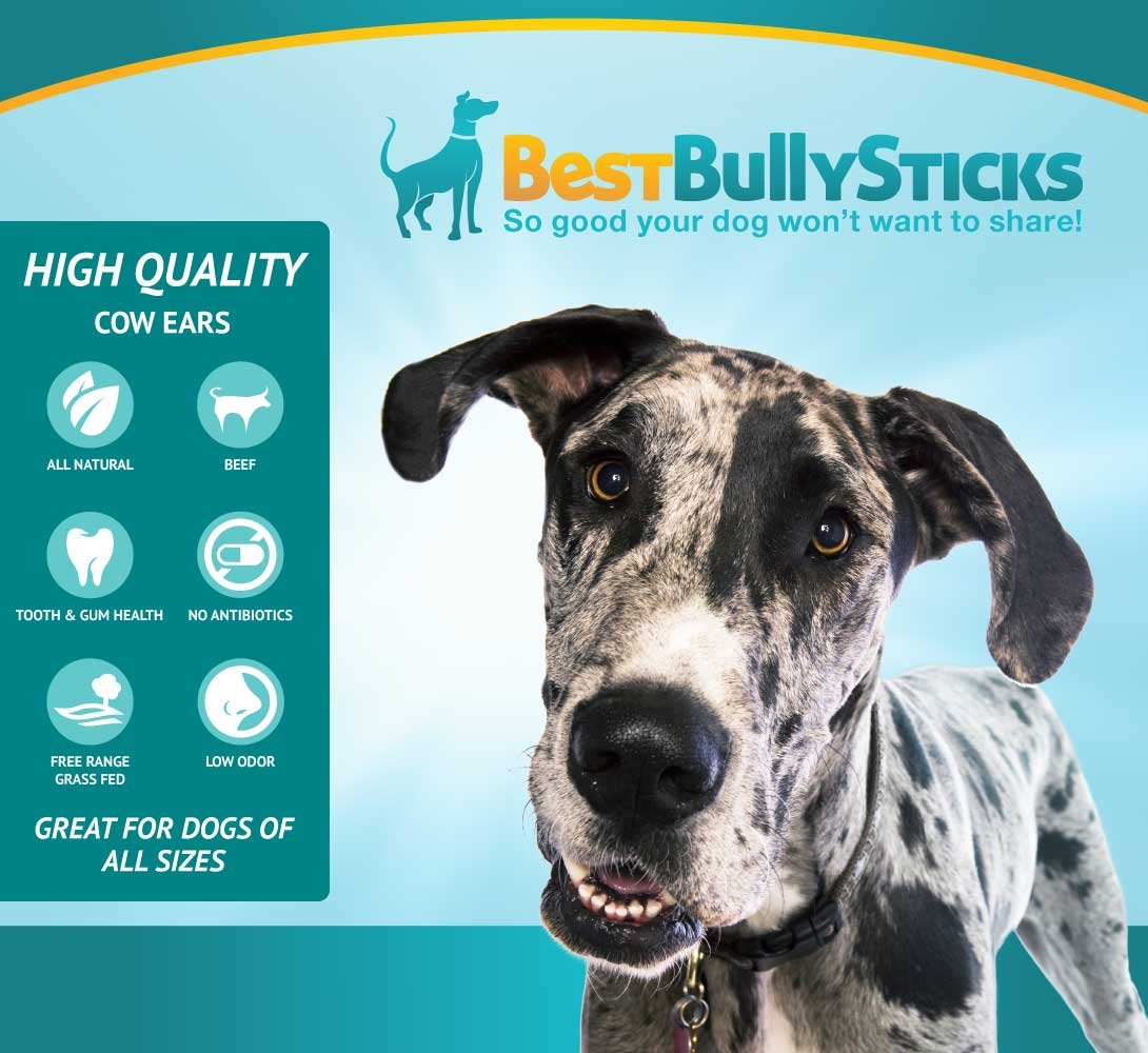 Best Bully Sticks Prime Thick-Cut Cow Ear Dog Chews by (12 Pack) Sourced From All Natural, Free Range Grass Fed Cattle with No Hormones, Additives or Chemicals - Hand-Inspected and USDA/FDA Approved by Best Bully Sticks (Image #7)