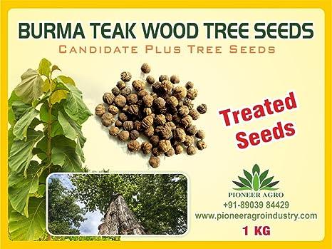 Bokashi Bran Burma Teak Wood Treated Seeds 1 Kg