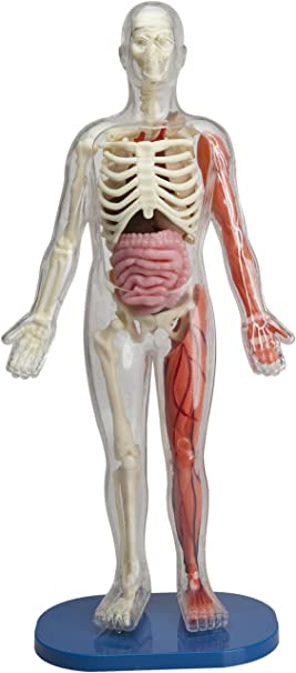 Amazon.com: SmartLab Toys Squishy Human Body: M.D. Lucille M ...