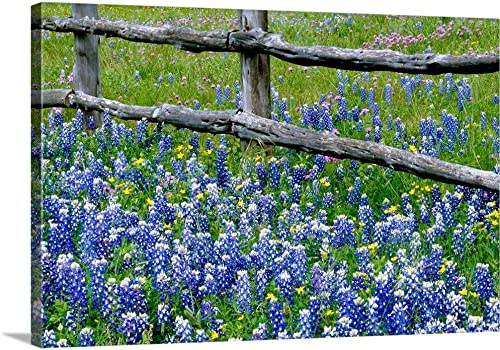 Bluebonnet Flowers Blooming Around Weathered Wood Fence