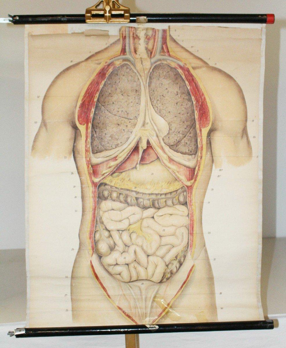 Beste Körperanatomie Zurück Galerie - Anatomie Von Menschlichen ...