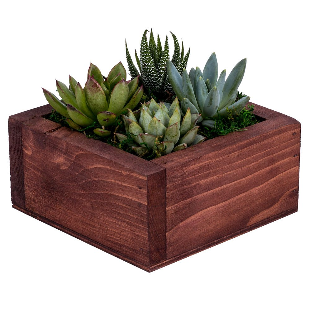 DecoBlooms Unique Succulent Wall Planter - Fully Rooted - Real Live Home Décor Succulents