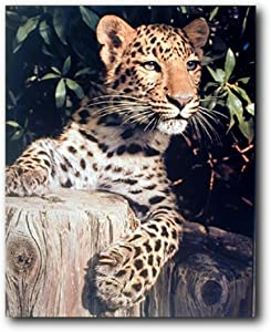 Leopard (Panther, Jaguar, Big Cat) Wild Animal Wall Decor Art Print Poster (16x20)