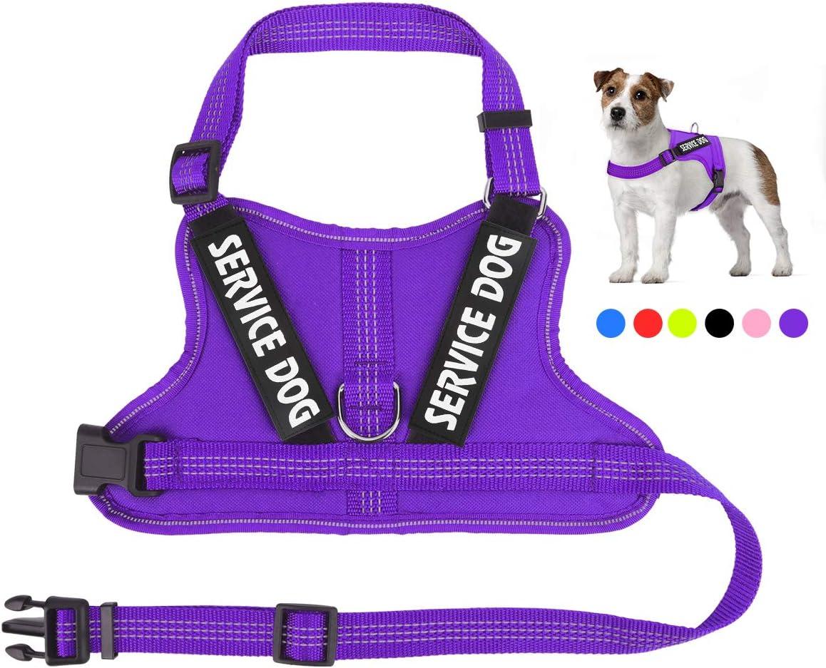 Purple service dog vest amazon austria passport by investment