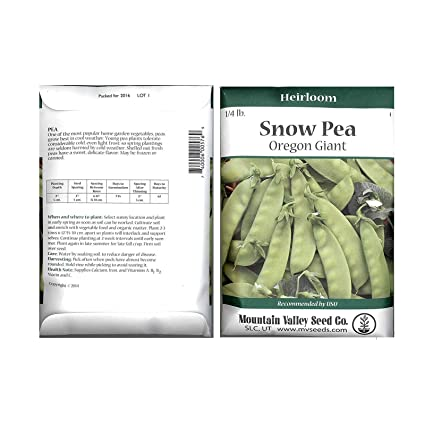 Snow Pea Garden Seeds - Oregon Giant - 26 Gram Seed Packet - Non-GMO  Vegetable Gardening Seeds - Sweet Pea Pods