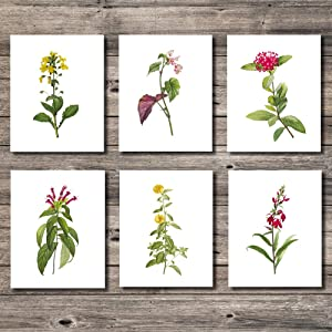Vibrant Botanical Prints, Flowers Canvas Print, 8x10 Unframed Floral Wall Arts, Set of 6 Plant Artwork, Wall Decor for Home Hotel Bedroom Living room Bars Office