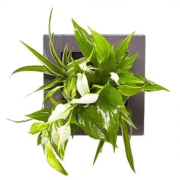 De Haute Qualite Tableau Végétal à Faire Soi Même Sans Plantes Technologie Mur Végétal (Gris  Taupe)