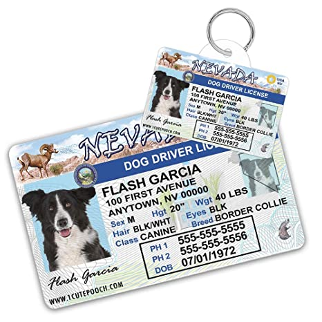 Cat Cats Wallet Pets Card Pet Amazon For Nevada Tags Driver Custom Dog Personalized And Tag com Id - Dogs License Supplies