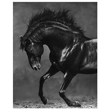 Tableau cheval noir 4 71YKIVp%2BdEL. SY355