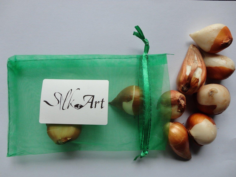 SILKSART 10 Tulip Bulbs early bloom Perennial Bulbs for Garden Planting Beautiful Flower--SHIPPING NOW!!! by SILKSART