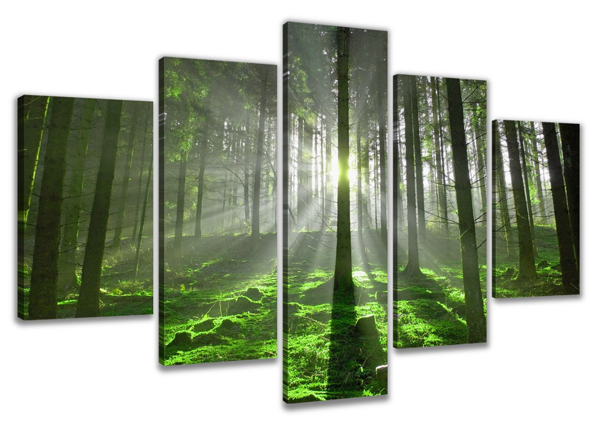 Amazon.de: Visario 6312 Bild auf Leinwand Wald fertig gerahmte ...