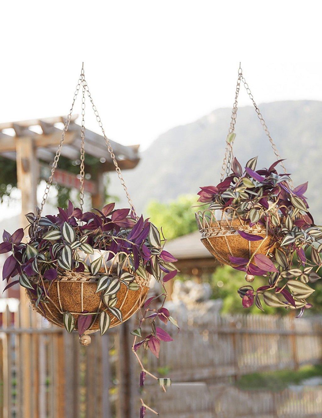 LB huajia ZHANWEI Hängende Blumentöpfe Im europäischen Stil Pastorale Gartenmauer Blumentopf Regale Eisen Wand hängenden Blumenkorb (Farbe : C)