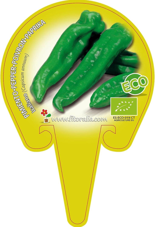 Plant/ón ecol/ógico de Pimiento Italiano maceta 10,5 cm de di/ámetro