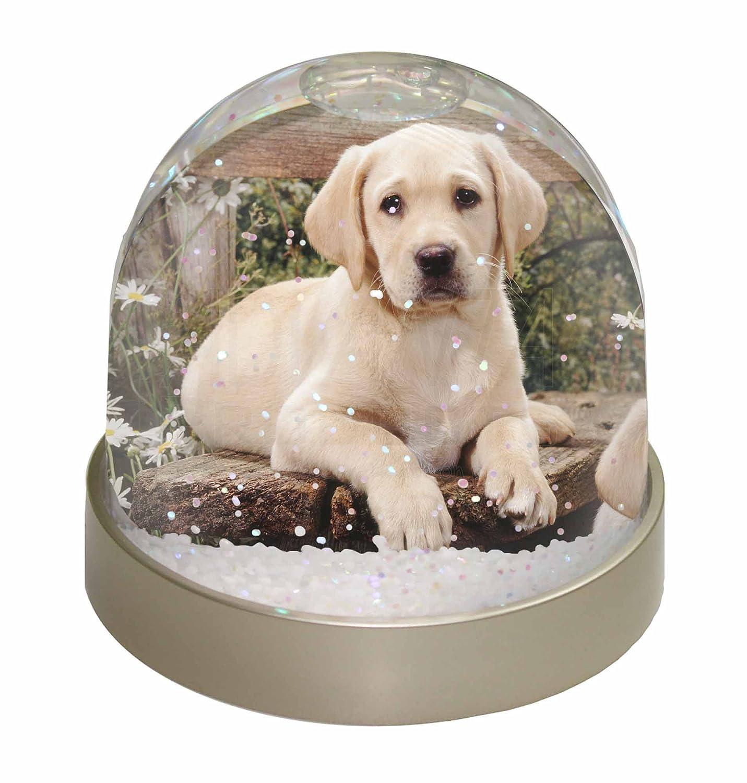 Advanta Yellow Labrador Puppy Snow Dome Globe Waterball Gift, Multi-Colour, 9.2 x 9.2 x 8 cm Advanta Products AD-L71GL